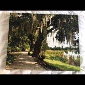 """Photo Art """"Southern Peace"""""""